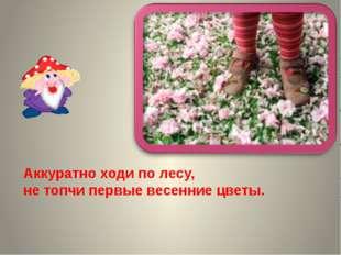 Аккуратно ходи по лесу, не топчи первые весенние цветы.