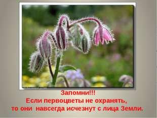 Запомни!!! Если первоцветы не охранять, то они навсегда исчезнут с лица Земли.