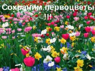 Сохраним первоцветы !!!