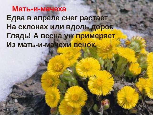 Мать-и-мачеха Едва в апреле снег растает На склонах или вдоль дорог, Глядь!...