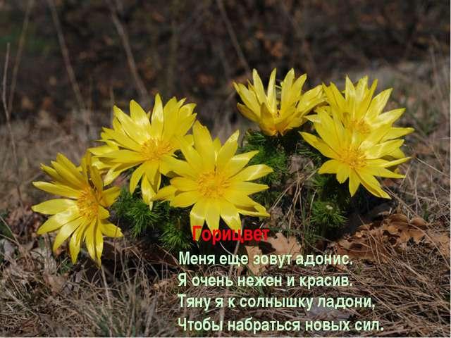Горицвет Меня еще зовут адонис. Я очень нежен и красив. Тяну я к солнышку ла...