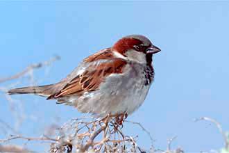 http://zooclub.ru/attach/birds/263.jpg