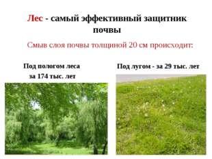 Лес - самый эффективный защитник почвы Под пологом леса за 174 тыс. лет Под л