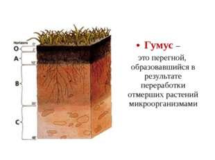Гумус – это перегной, образовавшийся в результате переработки отмерших растен