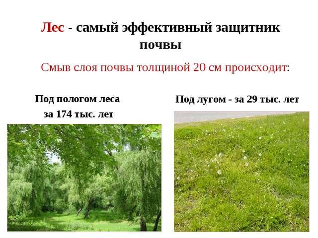 Лес - самый эффективный защитник почвы Под пологом леса за 174 тыс. лет Под л...