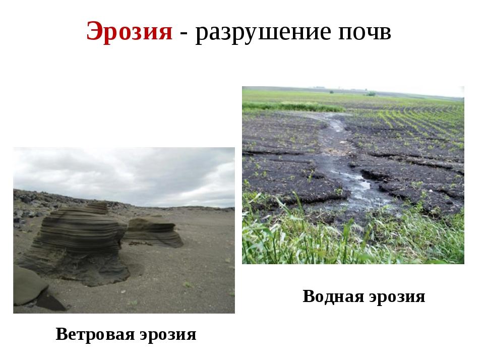 Эрозия - разрушение почв Ветровая эрозия Водная эрозия