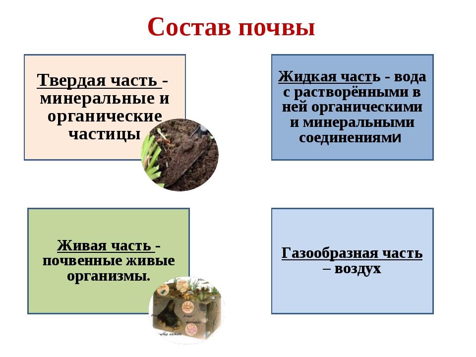 Состав почвы Твердая часть - минеральные и органические частицы Газообразная...