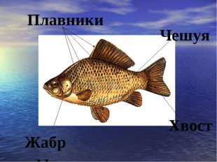 Хвост Плавники Чешуя Жабры