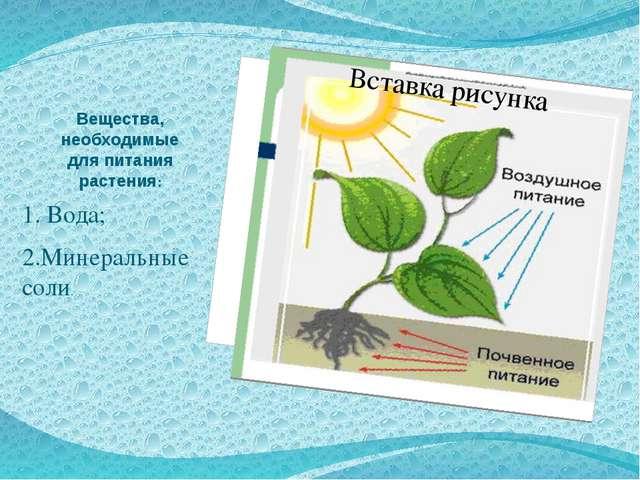 Вещества, необходимые для питания растения: 1. Вода; 2.Минеральные соли.