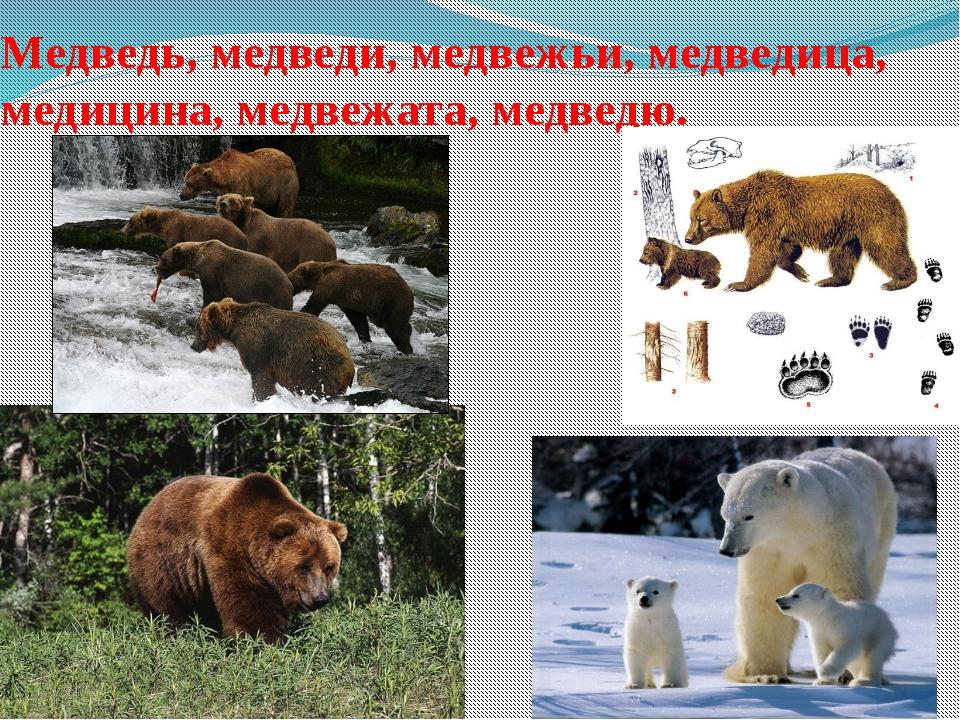 Медведь, медведи, медвежьи, медведица, медицина, медвежата, медведю.