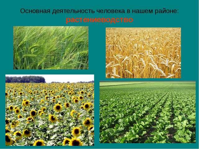 Основная деятельность человека в нашем районе: растениеводство