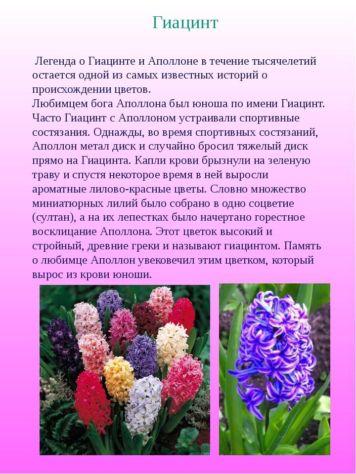 Как связано название цветка гиацинт в мифе гиацинт