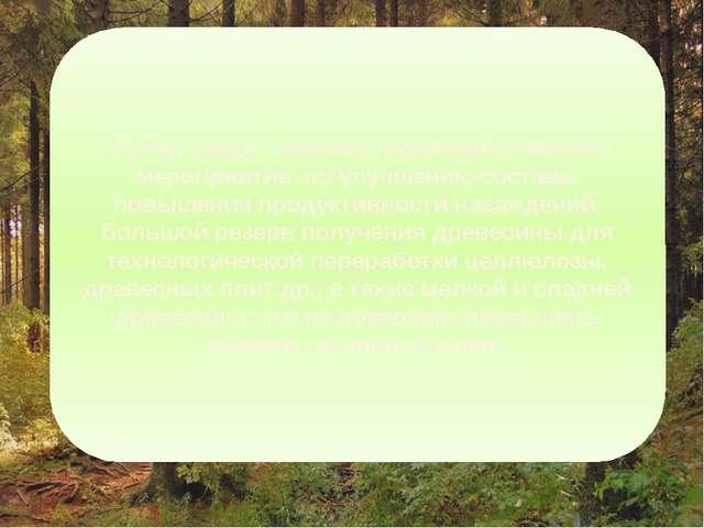 Рубки ухода – важное лесохозяйственное мероприятие по улучшению состава, повы...