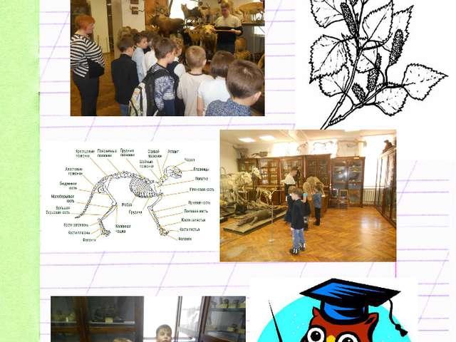 Зоологический музей Стр. 16