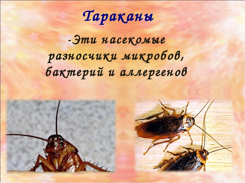 Тараканы -Эти насекомые разносчики микробов, бактерий и аллергенов