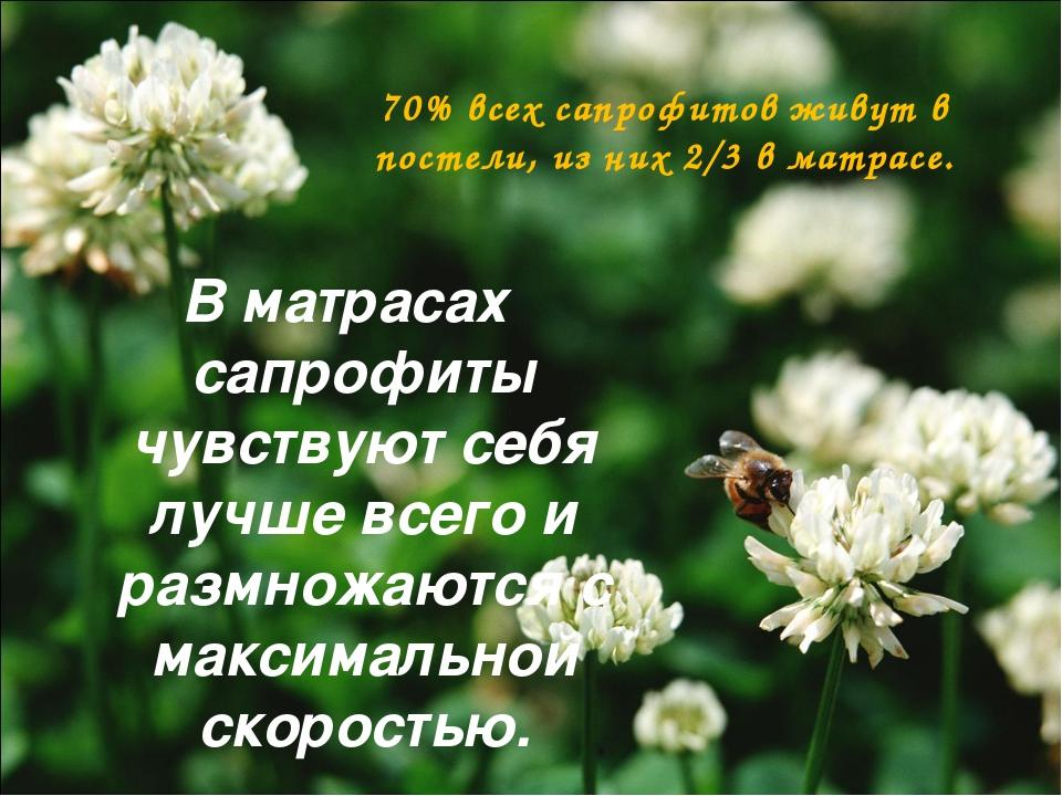 В матрасах сапрофиты чувствуют себя лучше всего и размножаются с максимальной...