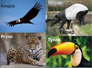 Ягуар. Тукан. Тапир. Кондор.