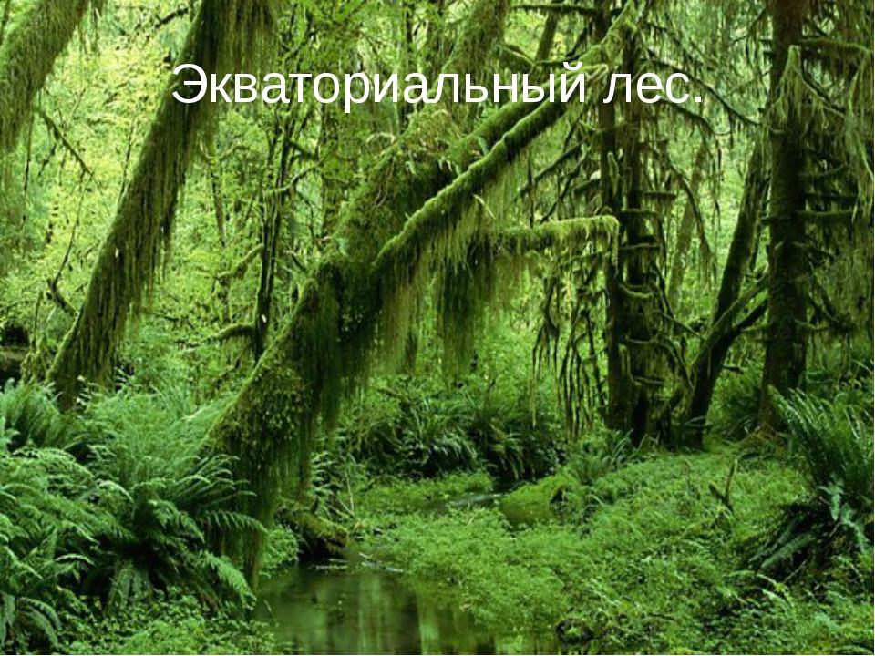 Экваториальный лес.