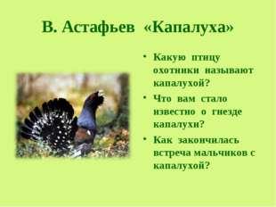В. Астафьев «Капалуха» Какую птицу охотники называют капалухой? Что вам стало