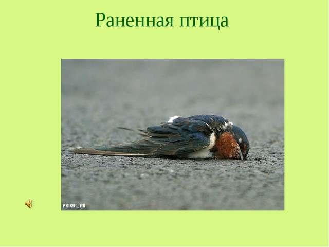 Раненная птица