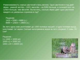 Размножаемость сорных растений очень велика. Одно растение в год даёт зёрен :