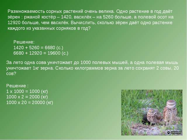 Размножаемость сорных растений очень велика. Одно растение в год даёт зёрен :...