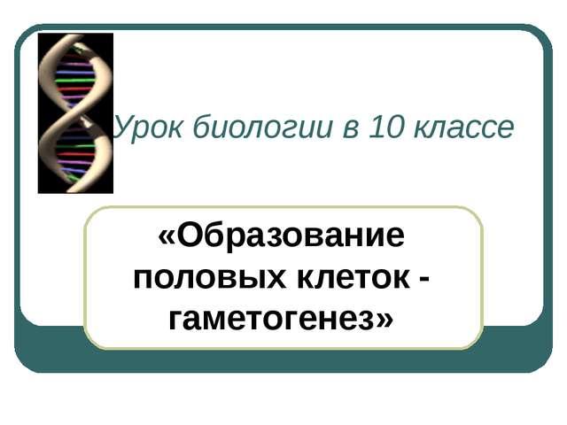 Урок биологии в 10 классе «Образование половых клеток - гаметогенез»