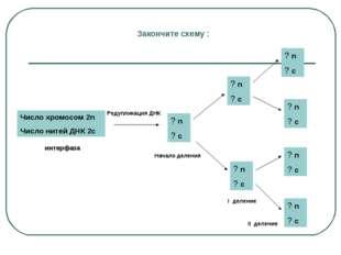 Закончите схему : Число хромосом 2n Число нитей ДНК 2с ? n ? с Редупликация Д