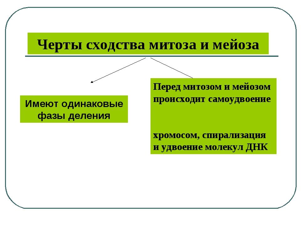 Черты сходства митоза и мейоза Перед митозом и мейозом происходит самоудвоени...