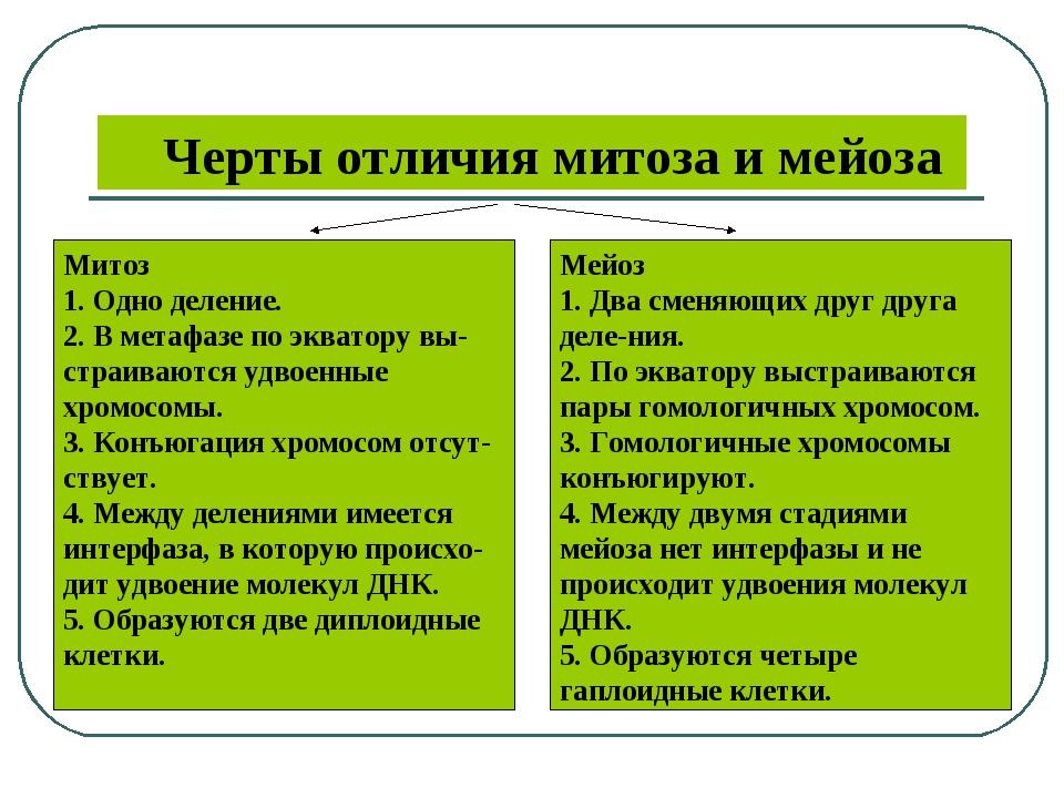 pdf orthodoxie