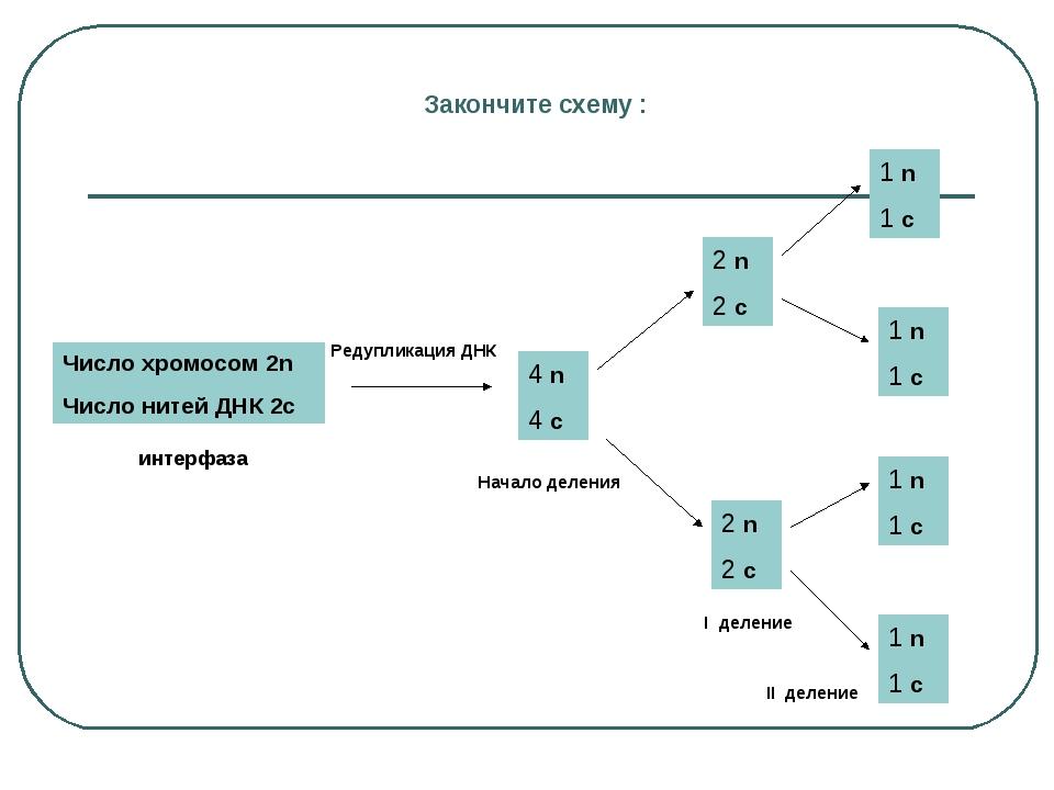 Закончите схему : Число хромосом 2n Число нитей ДНК 2с 4 n 4 с Редупликация Д...