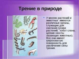 Трение в природе У многих растений и животных имеются различные органы, служ