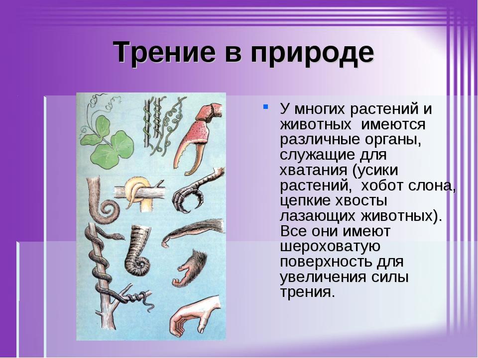 Трение в природе У многих растений и животных имеются различные органы, служ...