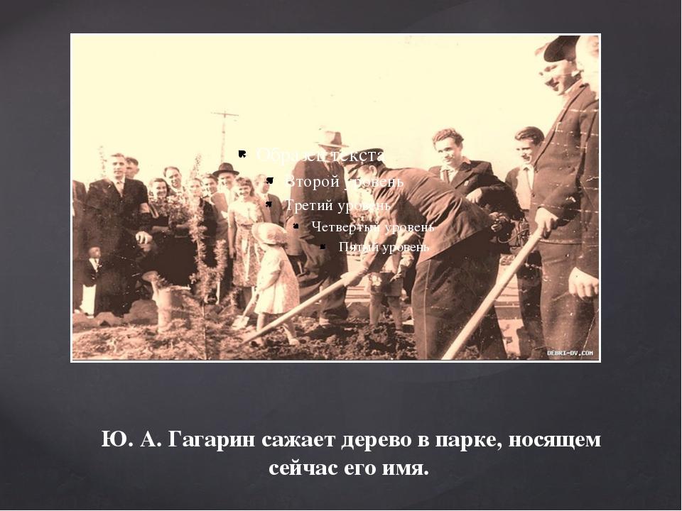 Ю. А. Гагарин сажает дерево в парке, носящем сейчас его имя.