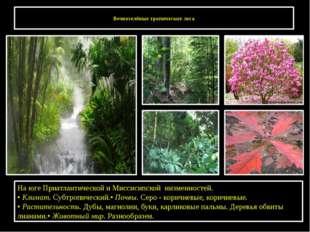 Вечнозелёные тропические леса На юге Приатлантической и Миссисипской низменн