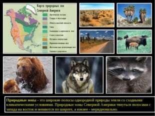 Природные зоны - это широкие полосы однородной природы земли со сходными кли