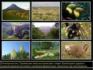 Растительность.Тропические типы жестколистных злаков. Преобладают деревья с