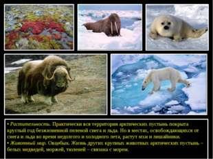 •Растительность. Практически вся территория арктических пустынь покрыта кру