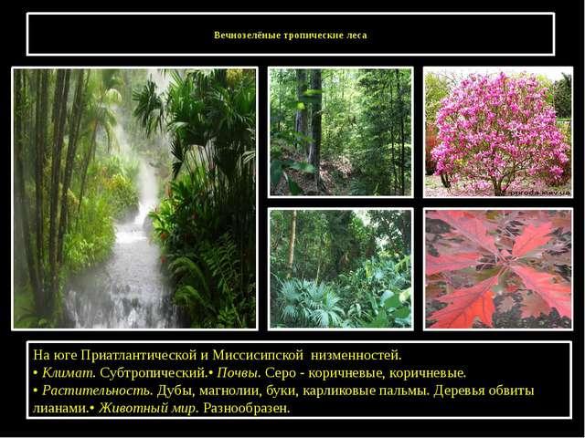 Вечнозелёные тропические леса На юге Приатлантической и Миссисипской низменн...