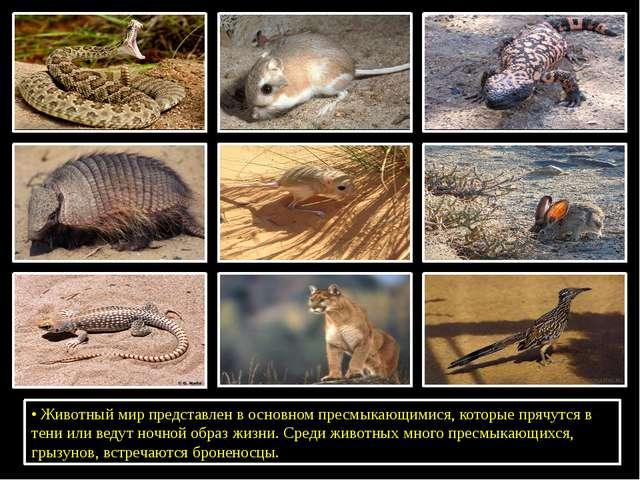 •Животный мир представлен в основном пресмыкающимися, которые прячутся в те...