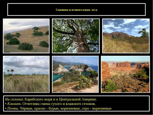 Саванны и вечнозеленые леса На склонах Карибского моря и в Центральной Амери...