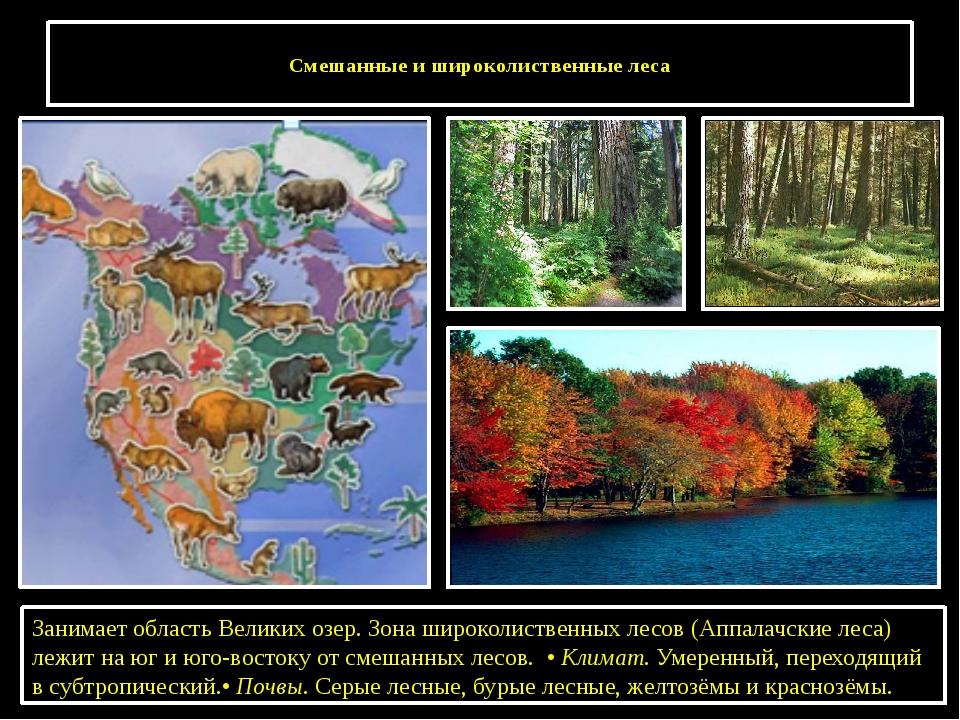 Смешанные и широколиственные леса Занимает область Великих озер. Зона широко...