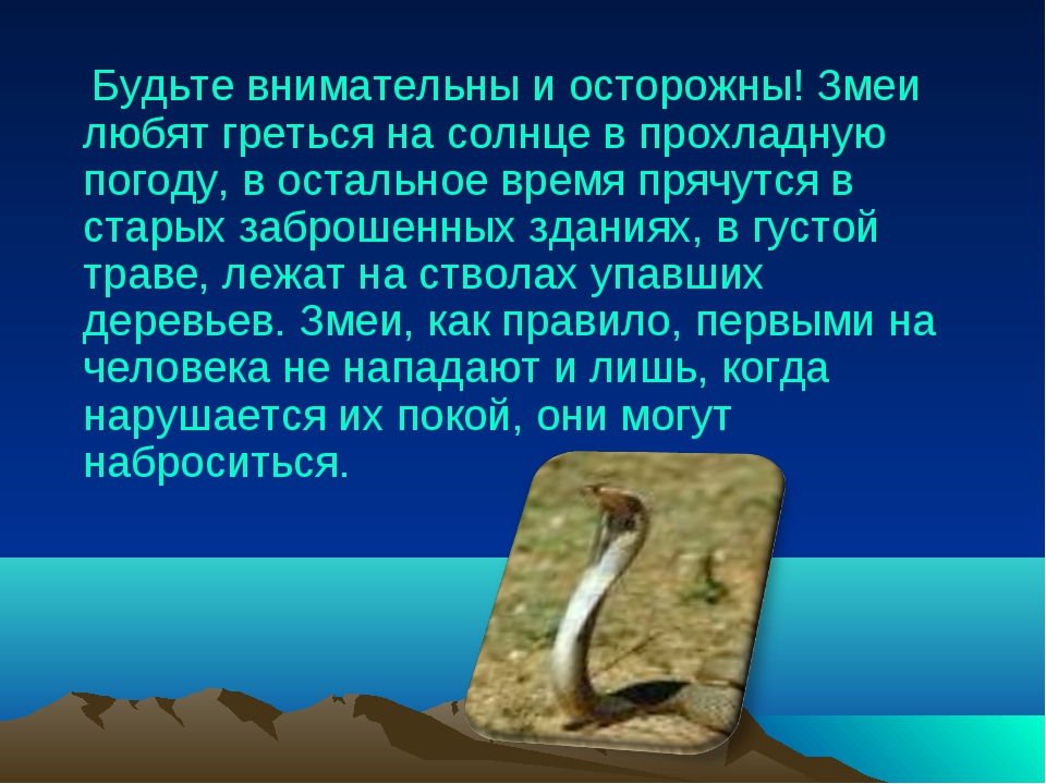Будьте внимательны и осторожны! Змеи любят греться на солнце в прохладную по...