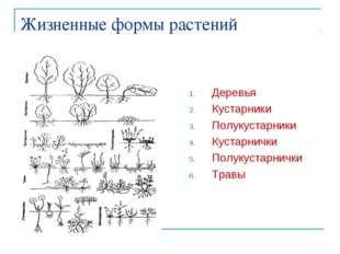 Жизненные формы растений Деревья Кустарники Полукустарники Кустарнички Полуку