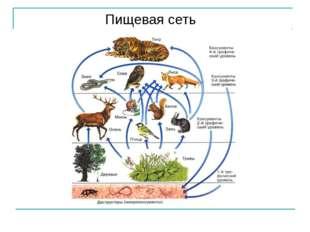 Пищевая сеть