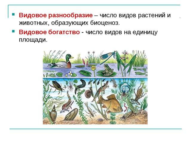 Видовое разнообразие – число видов растений и животных, образующих биоценоз....