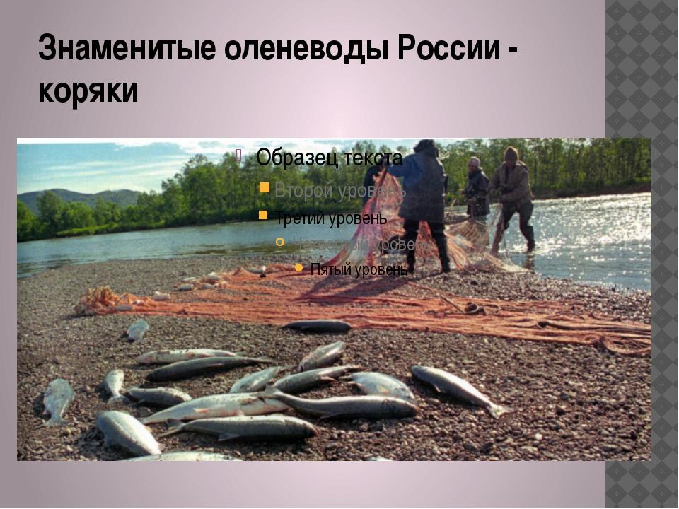 Знаменитые оленеводы России - коряки