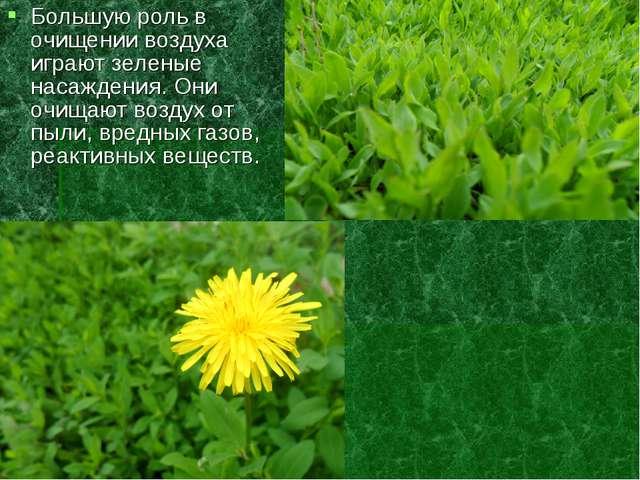 Большую роль в очищении воздуха играют зеленые насаждения. Они очищают воздух...