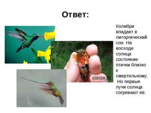 Ответ: Колибри впадает в литоргический сон. На восходе солнца состояние птичк