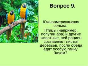 Вопрос 9. Южноамериканская сельва. Птицы (например, попугаи ара) и другие жив